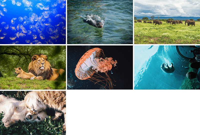 Seven wildlife backgrounds: jellyfish, sea lion, elephants, lions, polar bear, and a cat nuzzling a dog